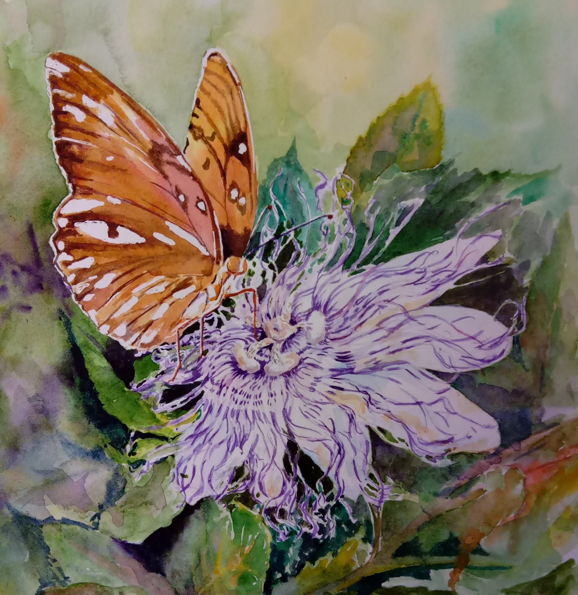butterfly on a passion flower