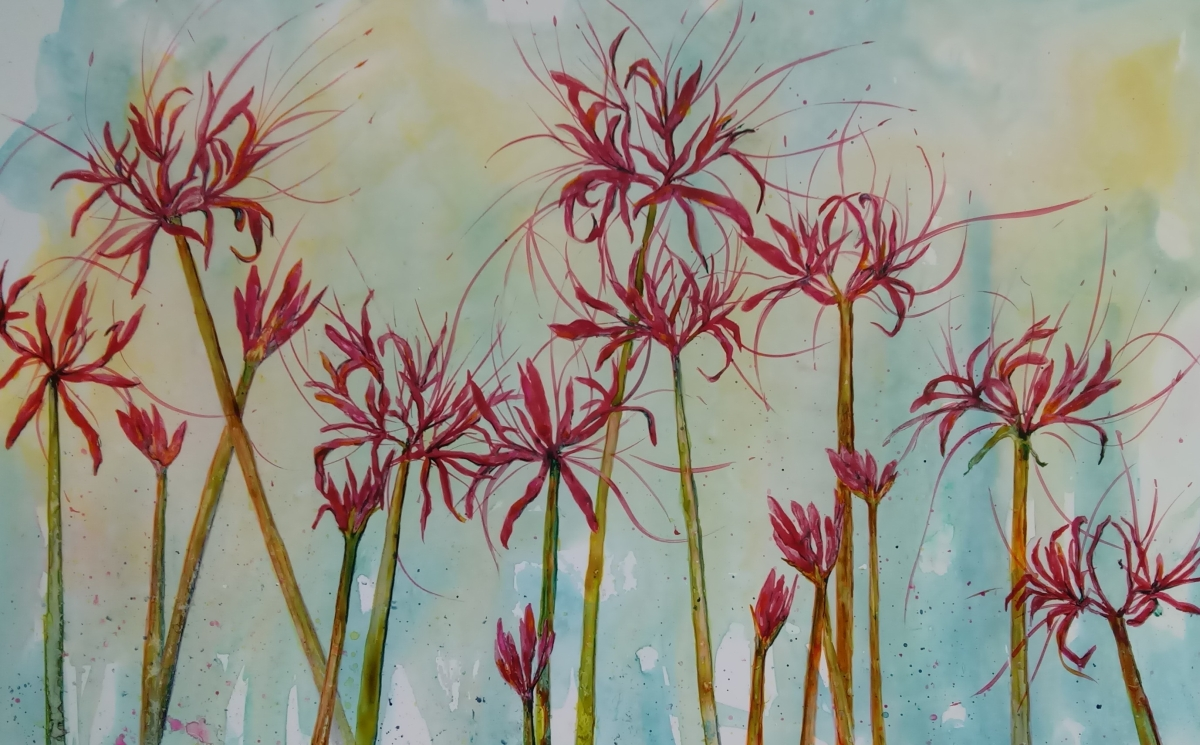 red spider lilies
